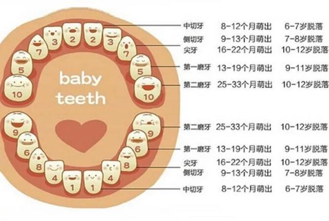 乳牙迟早要换,为什么还要治疗呢?